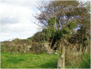 Dempsey house ruins, 2013 – the fence line runs parallel to Ballydivity Lane